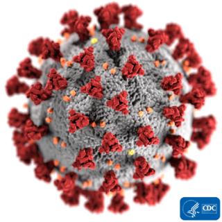 Coronavirus (Image from the CDC)